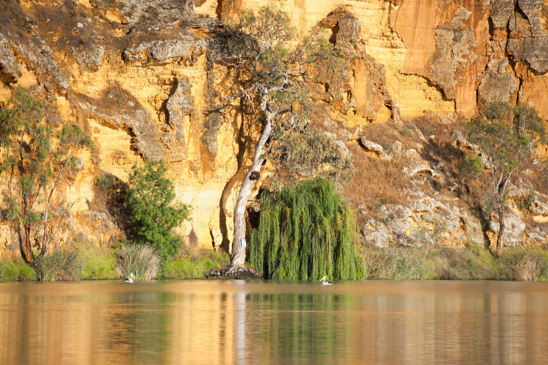Cliffs and tree on the banks of the Murray River