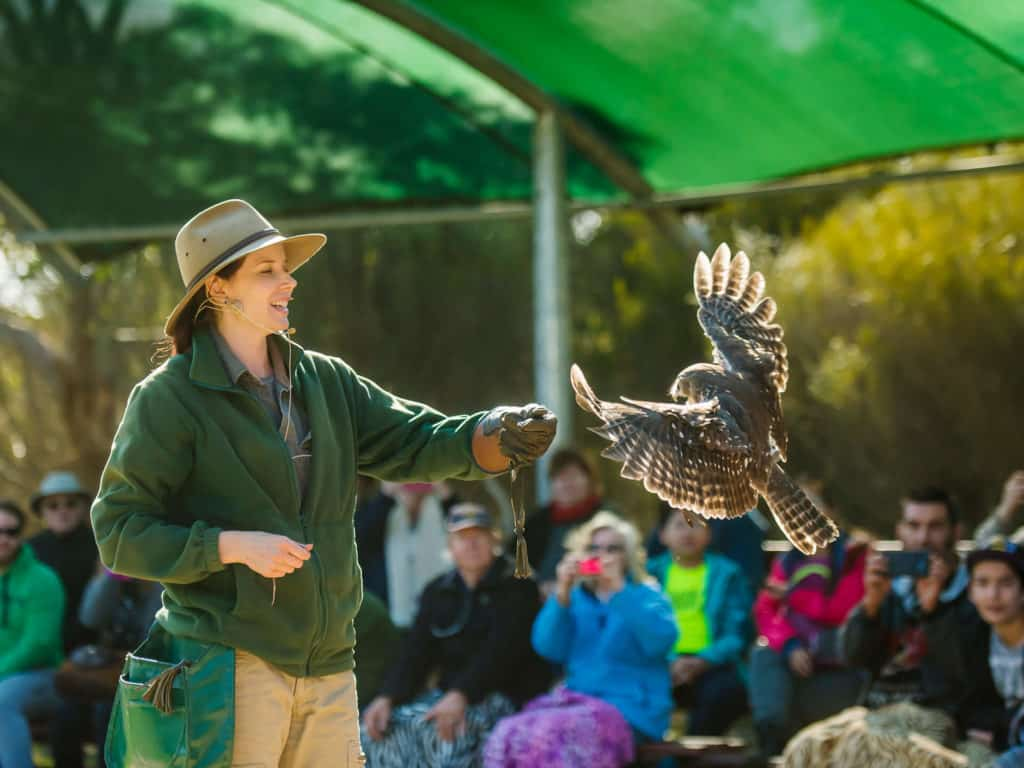 Bird handler doing demonstration Kangaroo Island