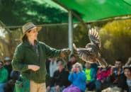 Bird handler doing demonstration Kangaroo Island