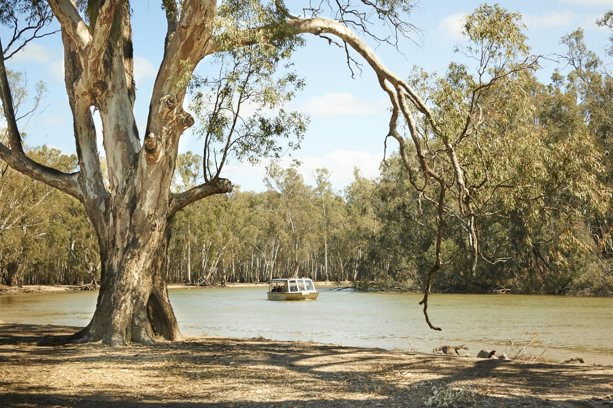 Murray River Cruising